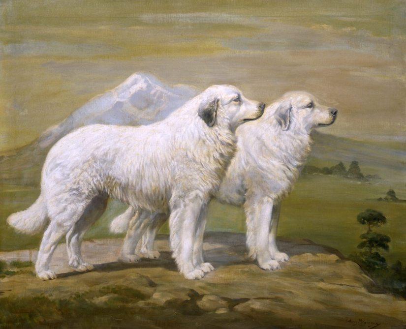 Ch. Estat d'Argeles of Basquaerie and Ch. estagel d' Argeles of Basquarie by Edwin Megargee