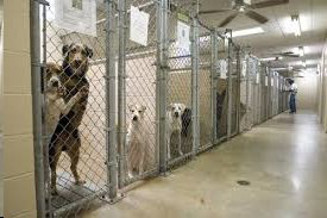 Dogs in shelter - picture