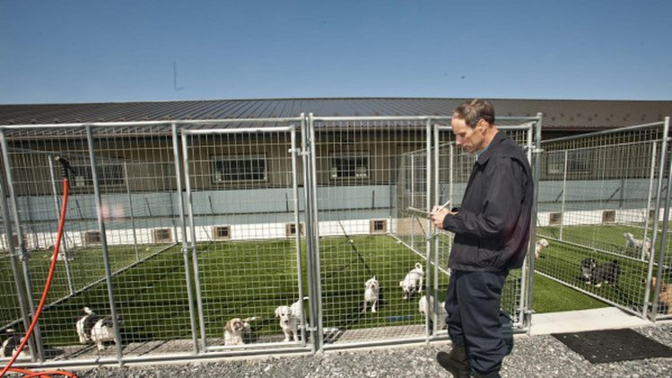 Part 3 puppy producers let 39 s talk dogs logically for Breeding kennel designs